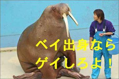 Seiuchi_2